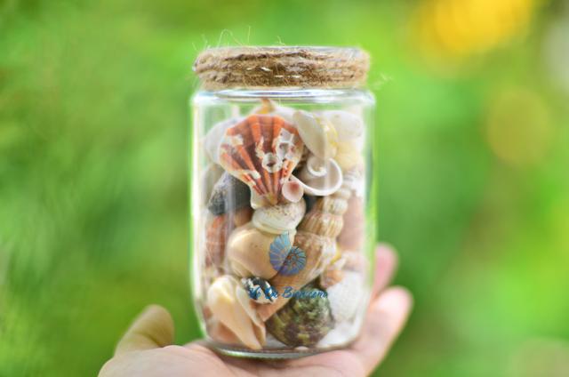 Hũ thủy tinh quà tặng vỏ sò ốc đủ loại MixShell_06 - hình chụp tại VoOcBien