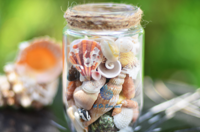 Hũ thủy tinh quà tặng vỏ sò ốc đủ loại MixShell_06