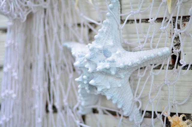 Sao biển gai nhuộm xanh biển – © bản quyền hình chụp tại VoOcBien