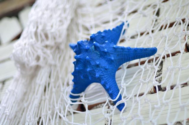 Sao biển gai nhuộm xanh biển - © bản quyền hình chụp tại VoOcBien