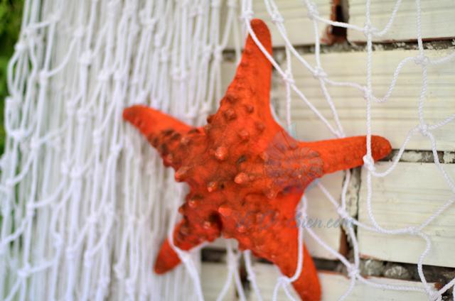 Sao biển gai lớn màu cam - © bản quyền hình chụp tại VoOcBien