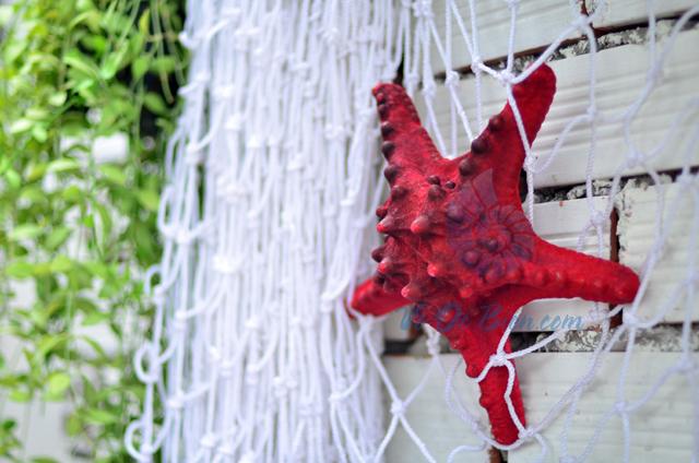 Sao biển gai lớn màu đỏ - © bản quyền hình chụp tại VoOcBien