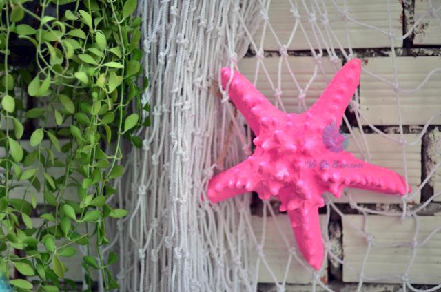 Sao biển gai lớn màu hồng