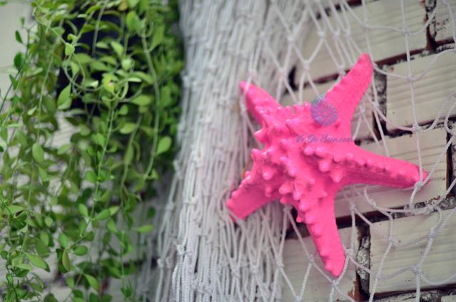 Sao biển gai lớn màu hồng – © bản quyền hình chụp tại VoOcBien