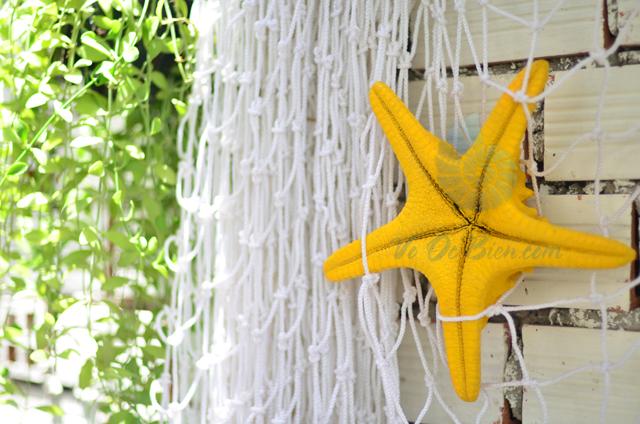 Sao biển gai lớn màu vàng- © bản quyền hình chụp tại VoOcBien