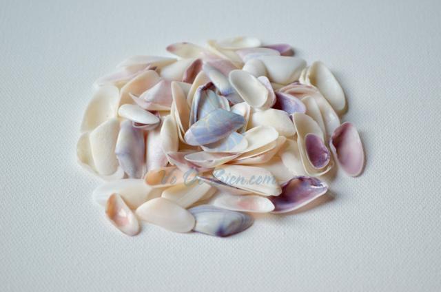 Vỏ chem chép nhí trắng (Coquina Sea Shells)