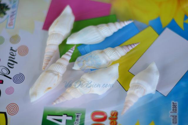 Vỏ ốc nhảy đuôi dài trắng