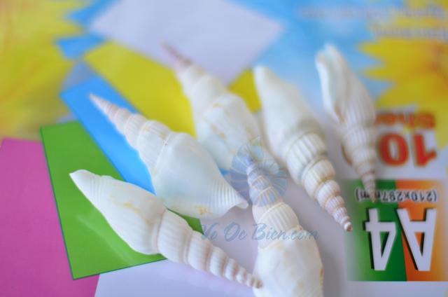 Vỏ ốc nhảy đuôi dài trắng - © bản quyền hình chụp tại VoOcBien