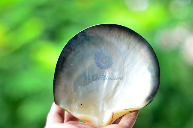 Vỏ trai sáp đen mài xà cừ - © bản quyền hình ảnh thuộc VoOcBien.com