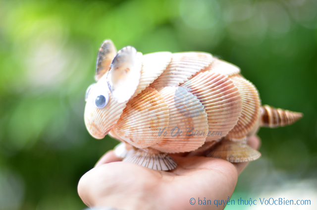 Chuột hamster vỏ sò ốc QLN_17 - © bản quyền hình ảnh thuộc VoOcBien.com