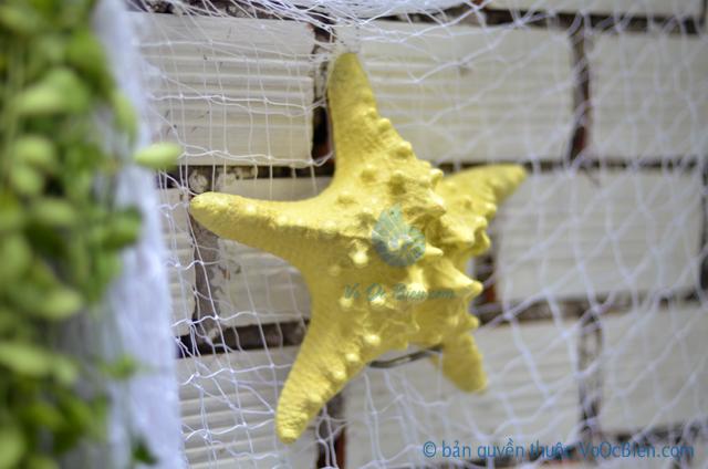 Sao biển gai lớn màu vàng kem - © bản quyền hình ảnh tại VoOcBien.com