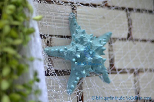 Sao biển gai lớn màu xanh ngọc - © bản quyền hình ảnh tại VoOcBien.com
