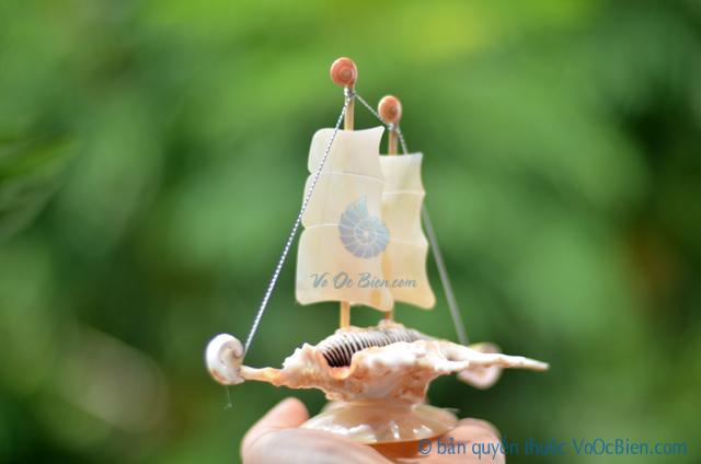 Thuyền buồm vỏ ốc nhỏ TB20 - © bản quyền hình ảnh thuộc VoOcBien.com