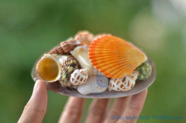 Gói vỏ sò ốc đủ loại đế trai đen - © bản quyền hình ảnh thuộc VoOcBien.com