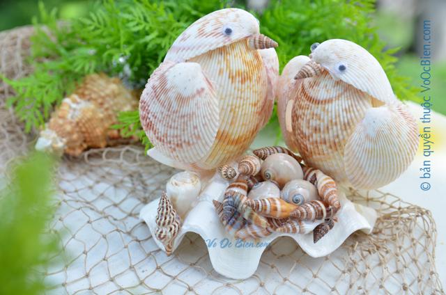 Cặp chim vỏ sò dương QLN_20 - © bản quyền hình ảnh thuộc VoOcBien.com