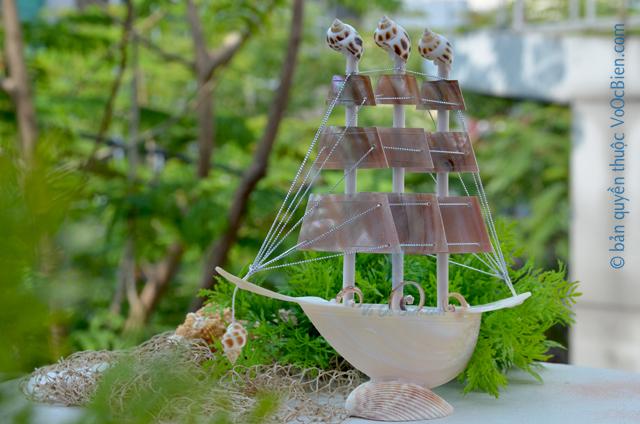 Thuyền buồm vỏ ốc (nhỏ) TB26_N - © bản quyền hình ảnh thuộc VoOcBien.com