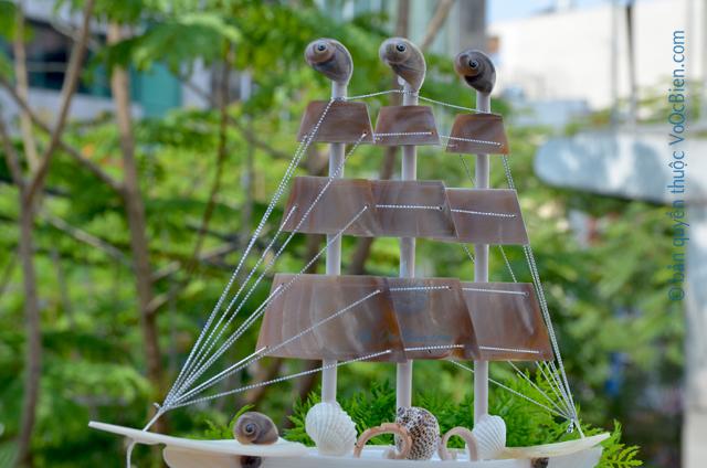 Thuyền buồm vỏ ốc (trung) TB27_N - © bản quyền hình ảnh thuộc VoOcBien.com