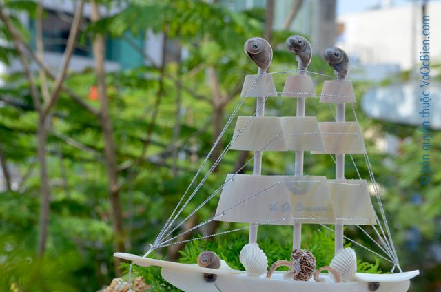 Thuyền buồm vỏ ốc (trung) TB27_T - © bản quyền hình ảnh thuộc VoOcBien.com