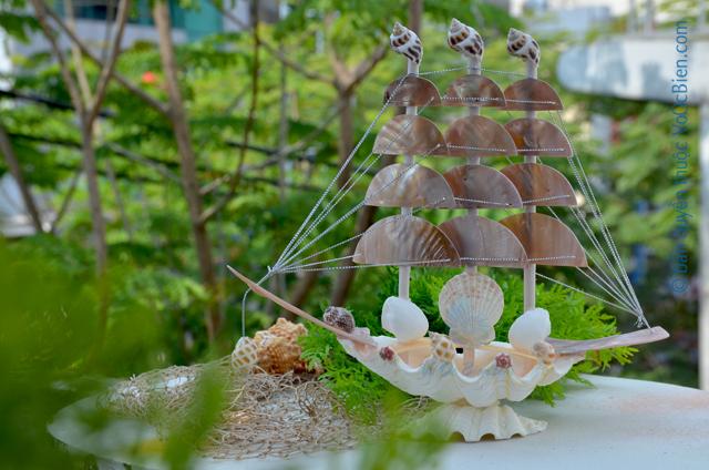Thuyền buồm vỏ ốc (trung) TB28_N - © bản quyền hình ảnh thuộc VoOcBien.com