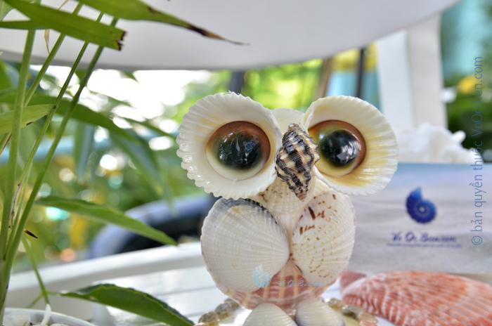 Chim cú mèo mắt lớn vỏ sò ốc QLN_29