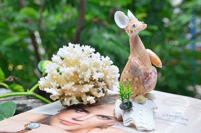 Chuột túi Kangaroo vỏ sò ốc QLN_28