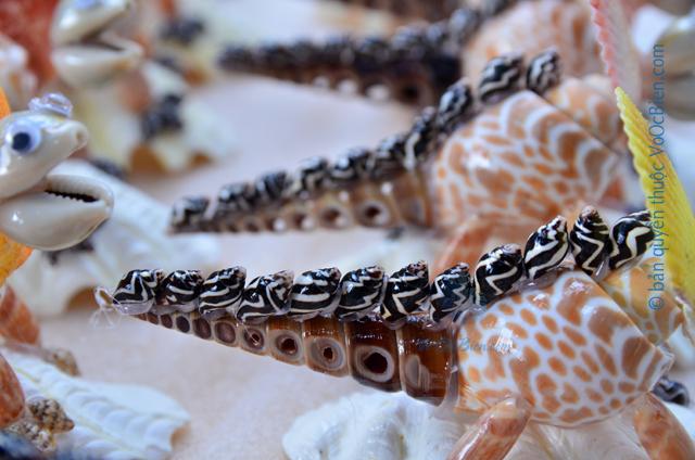 Khủng long mang vỏ sò ốc QLN_26