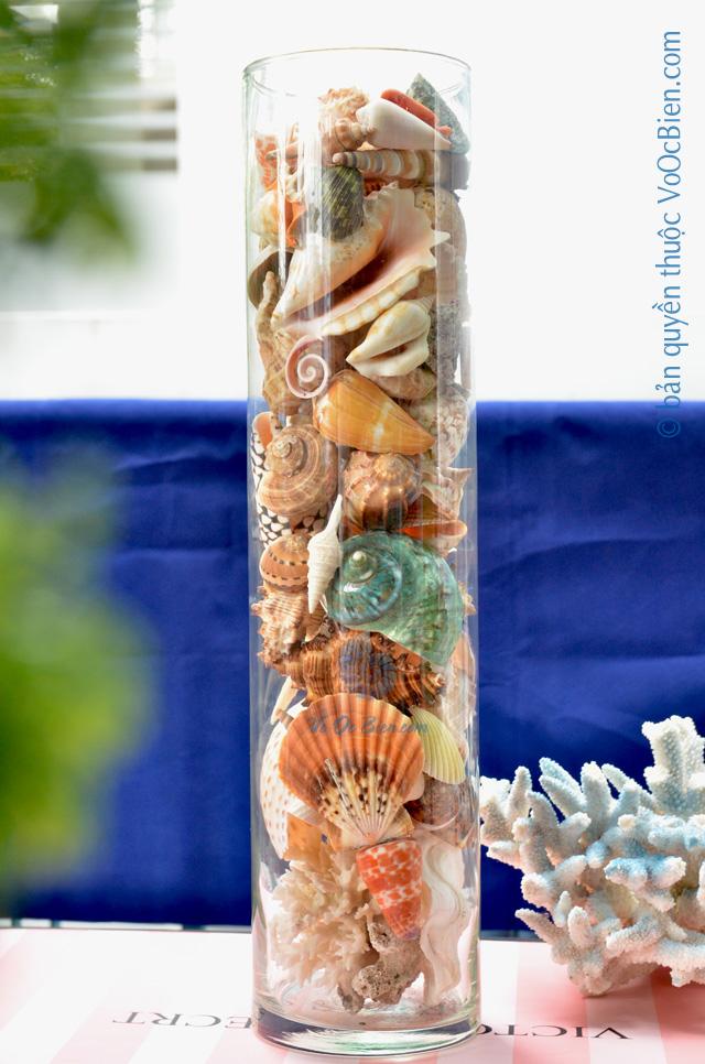 Lọ thuỷ tinh mix đầy vỏ sò ốc 15×50 LOTK_46