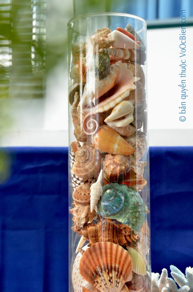 Lọ thuỷ tinh mix đầy vỏ sò ốc 15x60