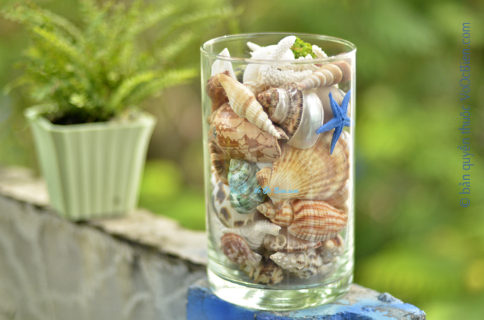 Lọ thuỷ tinh mix đầy vỏ sò ốc 15×20