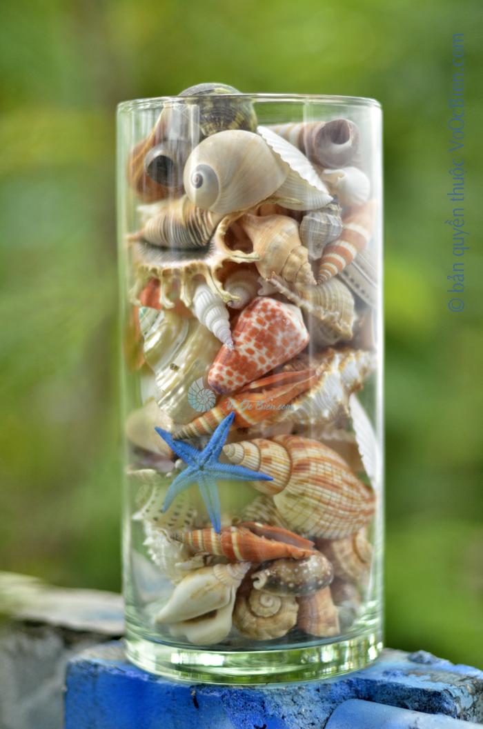 Lọ thuỷ tinh mix đầy vỏ sò ốc 15×25