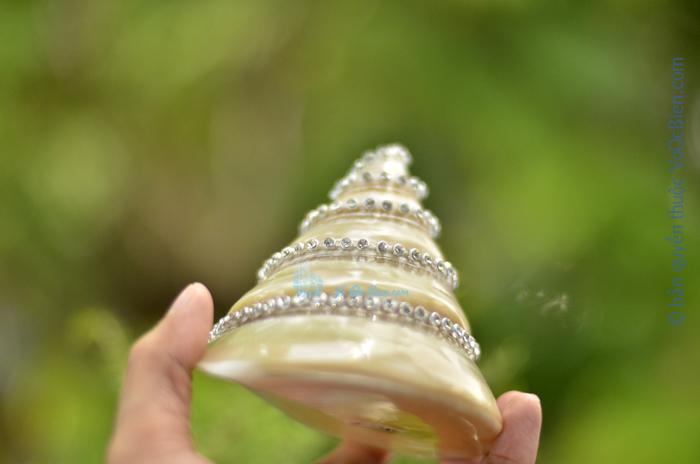 Vỏ ốc nón xà cừ lớn đính hạt