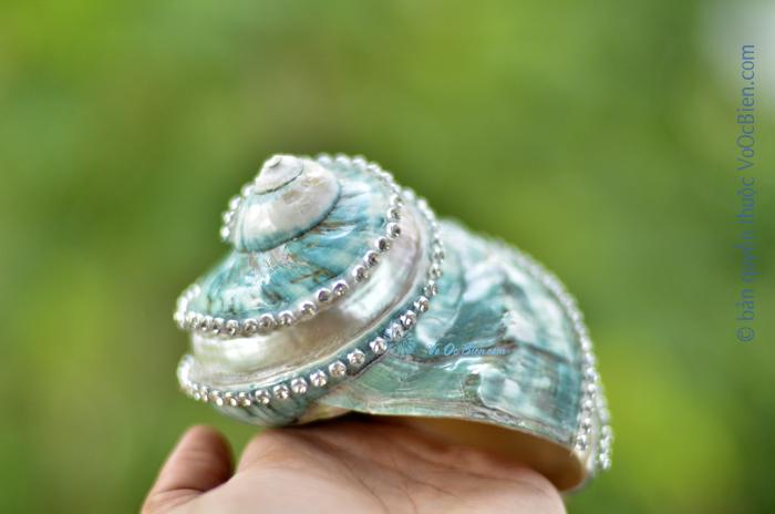 Vỏ ốc xà cừ xanh nhỏ chạy chỉ đính hạt