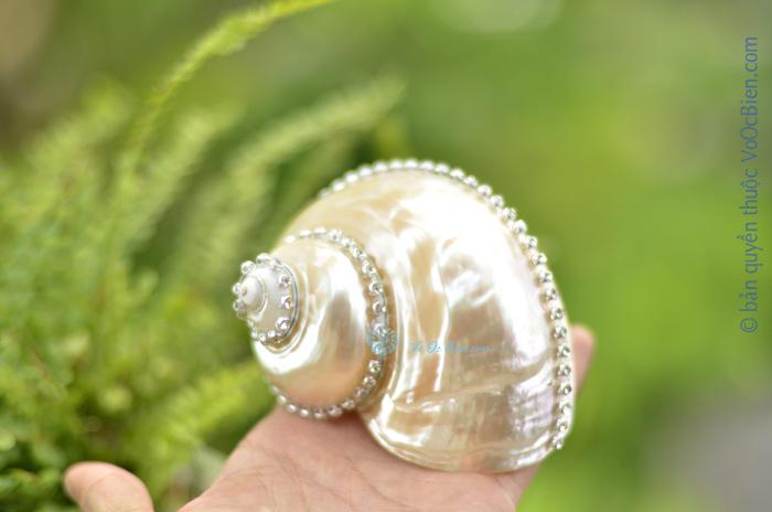 Vỏ ốc xà cừ xanh nhỏ đính hạt