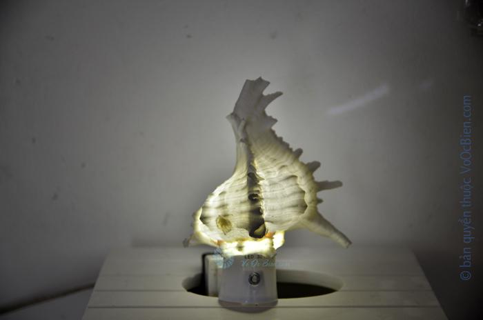 Đèn ngủ cắm tường ốc gai trắng ĐN36