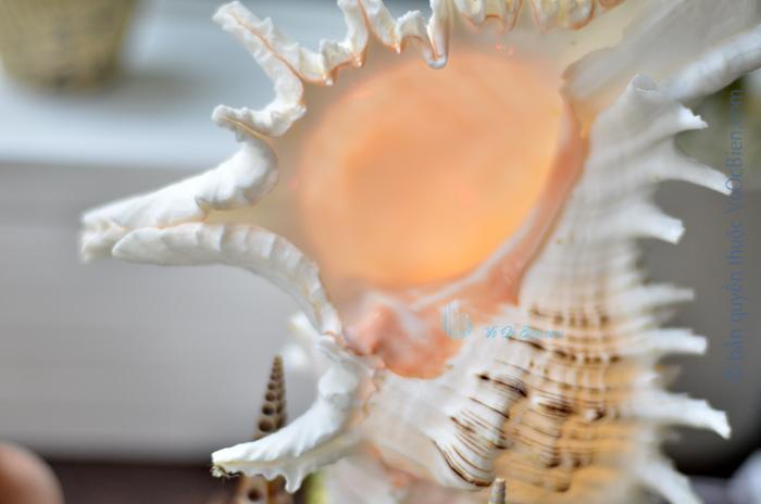 Đèn ngủ để bàn ốc gai trắng ĐN42