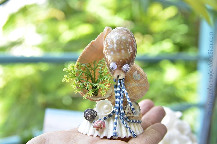 Bạch tuộc vỏ ốc nga chấm bông QLN_47