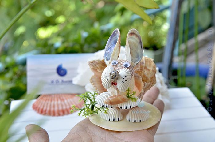 Chú thỏ vỏ ốc gáo miệng rộng QLN_45